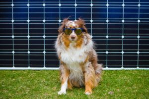 Selway the SBS Solar Dog Wants to Bust some Solar Myths